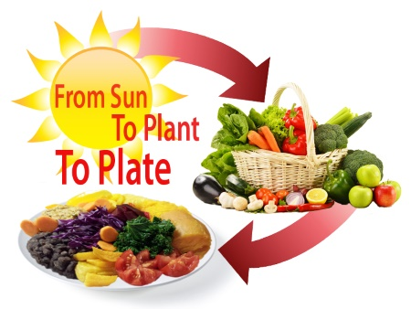 FromSunToPlantToPlate.Starch Smart.w450.web