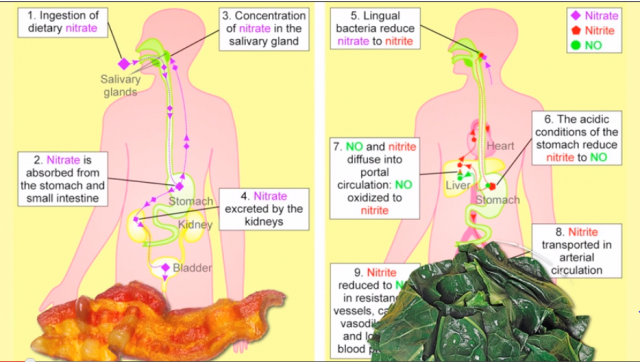 Nitrites in Processed Meats Cause Cancer