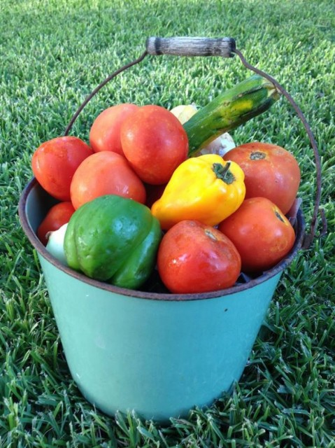 ALS Challenge Using Fruit-Veggies