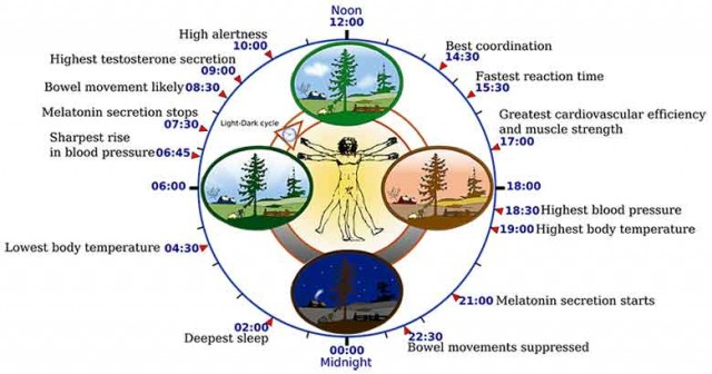 Controlling Weight with Circadian Rhythms