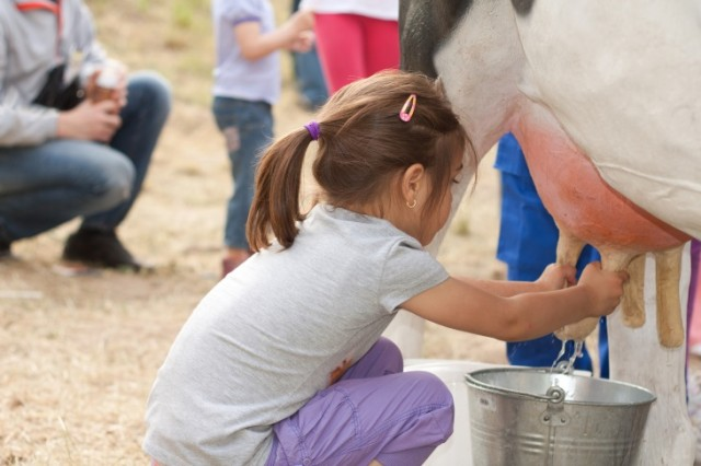 Is Cow Milk Designed for Humans?